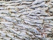 Zakorzenia kokosowego drzewa Obrazy Royalty Free