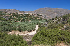 Zakros gorge at Crete island in Greece Royalty Free Stock Photos