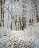 zakrywająca śnieżna drzewna zima Fotografia Stock