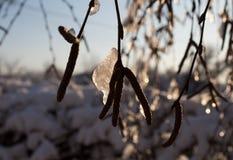 zakrywająca czarodziejskiego lasu domu śniegu bajki zima drewniana Fotografia Royalty Free