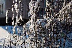 zakrywająca czarodziejskiego lasu domu śniegu bajki zima drewniana Obraz Royalty Free