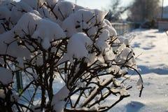 zakrywająca czarodziejskiego lasu domu śniegu bajki zima drewniana Zdjęcia Stock