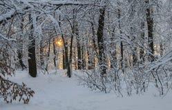 zakrywająca czarodziejskiego lasu domu śniegu bajki zima drewniana Zdjęcie Royalty Free