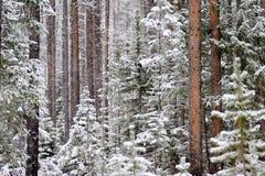 zakrywający śnieżni drzewa Obrazy Stock