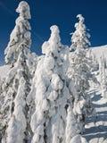 zakrywający śnieżni drzewa Obrazy Royalty Free