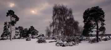 zakrywający śnieżni drzewa Fotografia Royalty Free