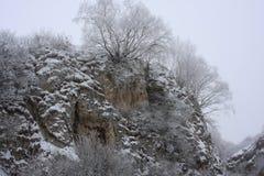 zakrywający śnieżni drzewa Zdjęcia Royalty Free