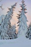 zakrywający śnieżni drzewa dwa Zdjęcie Stock
