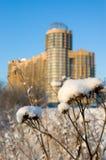 zakrywający śnieżny oset Fotografia Royalty Free