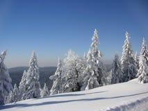 zakrywający śniegu świerczyny drzewa Obraz Royalty Free