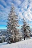 zakrywający futerka śniegu drzewa dwa Fotografia Stock