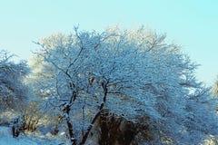 zakrywający hoarfrost domu halnych gór śnieżni drzewa Zdjęcie Stock