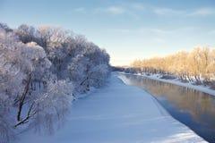 zakrywający hoarfrost rzeki śniegu drzewa zdjęcia royalty free