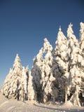 zakrywający jodły śniegu drzewa Fotografia Stock