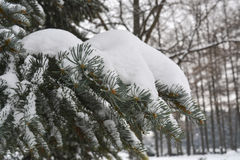 zakrywający jodły śniegu drzewo Fotografia Stock