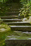 zakrywający mech kroków kamień Obraz Stock
