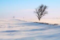 zakrywający pola śniegu drzewo Fotografia Stock