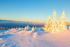 Zakrywający z śniegu stojakiem few drzewa w magicznych płatkach śniegu Zdjęcia Royalty Free