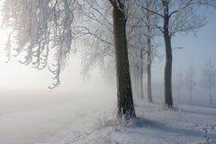 Zakrywający z hoarfrost zima drzewa Zdjęcia Stock