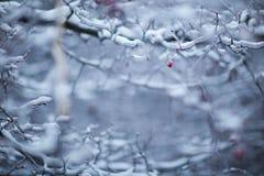 zakrywający lodowy drzewo obraz royalty free