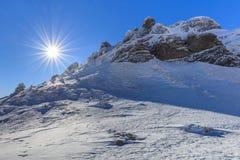 zakrywająca krajobrazowa halnej sosny śniegu świerczyny zima Obrazy Stock