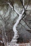 zakrywający pierwszy śnieżny drzewo Zdjęcie Royalty Free