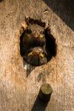 zakupu nabywcy kanonu zaufania jedlinowy wysoki dom ja wizerunki zapewniam ilości serie wróblie drzewa wróbli use ty l obiektyw z Obrazy Stock