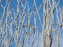 zakupu nabywcy kanonu zaufania jedlinowy wysoki dom ja wizerunki zapewniam ilości serie wróblie drzewa wróbli use ty l obiektyw z Obraz Stock