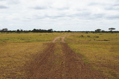 Zakurzona droga od Serengeti Fotografia Stock