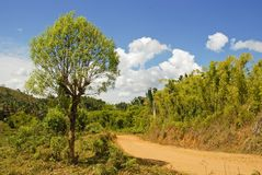 Zakurzona safari droga w Madagascar Fotografia Royalty Free