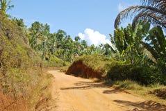 Zakurzona safari droga w Madagascar Zdjęcia Stock