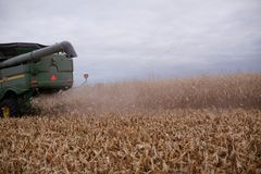 Zakurzony syndykata żniwiarz na suchej, przeprowadzającej żniwa pszenicznej uprawie, obraz stock