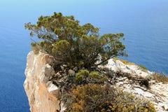 Zakynthos headland. The green shrub overgrown the headland Stock Images