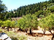 Zakynthos vegetationträd Fotografering för Bildbyråer