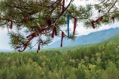 Zalaa - ταινίες, που δένονται στα δέντρα Στοκ Φωτογραφία
