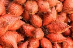 Zalacca果子热带 库存图片