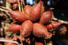 Zalacca, Fruit van Rayong in Thailand Royalty-vrije Stock Fotografie