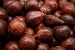 Zalacca palm Stock Image