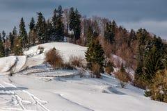 Zalesiony zbocze zakrywający z śniegiem Obrazy Stock