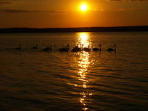 Zalew Sulejowski en la puesta del sol. Fotos de archivo libres de regalías