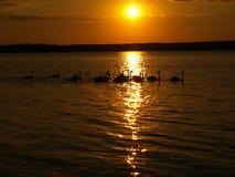 Zalew Sulejowski am Sonnenuntergang. Lizenzfreie Stockfotos