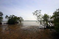 zalewa mangrowe tropikalnego krajobrazu Zdjęcie Stock