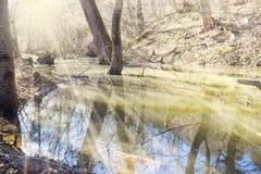 Zalewa w lesie w pogodnym wiosna dniu obraz stock