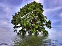 zalewający dębowy odludny drzewo zdjęcie stock