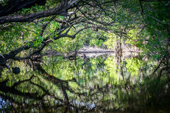 Zalewający drewna - Curacao widoki obrazy stock