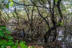 Zalewający drewna - Curacao widoki obraz royalty free