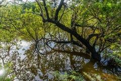 Zalewający drewna - Curacao widoki fotografia royalty free
