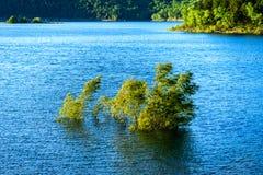 Zalewający drzewo w jeziorze fotografia royalty free