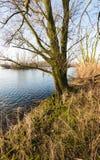 Zalewający floodplain ważna rzeka w holandiach obraz stock