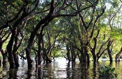 Zalewający las namorzynowi drzewa zdjęcie royalty free